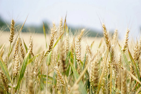 GAEC-groupement-agricole-exploitation-commun-isere-38